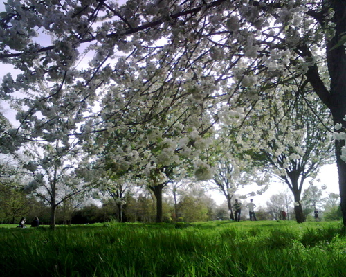 Hyde_park_london_spring_08